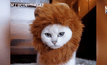 ลูกแมว โคบี้ ขวัญใจชาวเน็ต