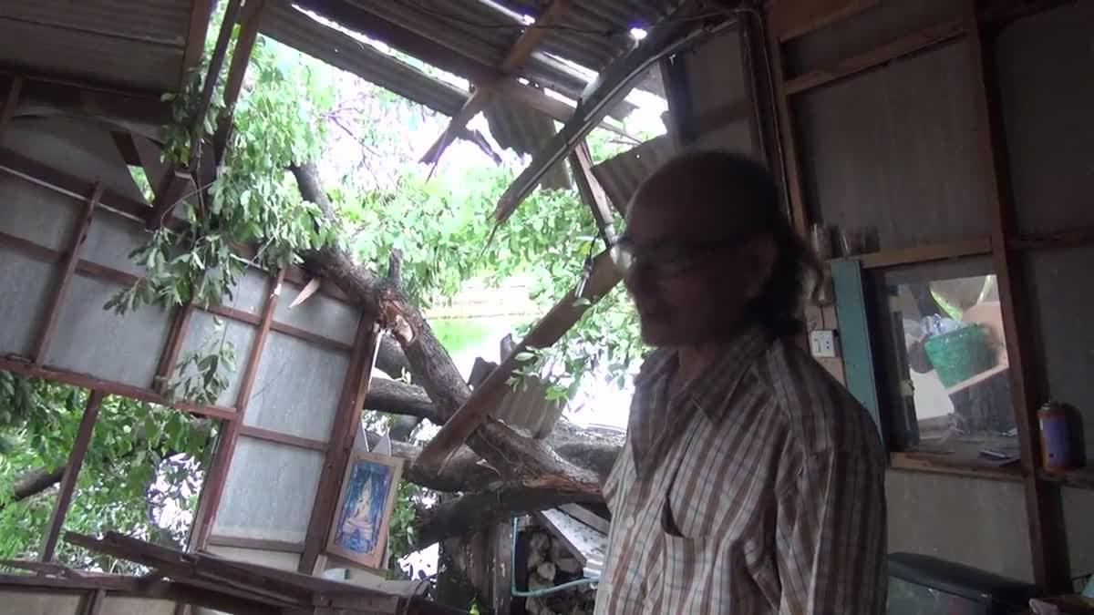 ต้นหว้า อายุกว่า 100 ปี โค่นล้มทับบ้านประชาชน ได้รับความเสียหาย