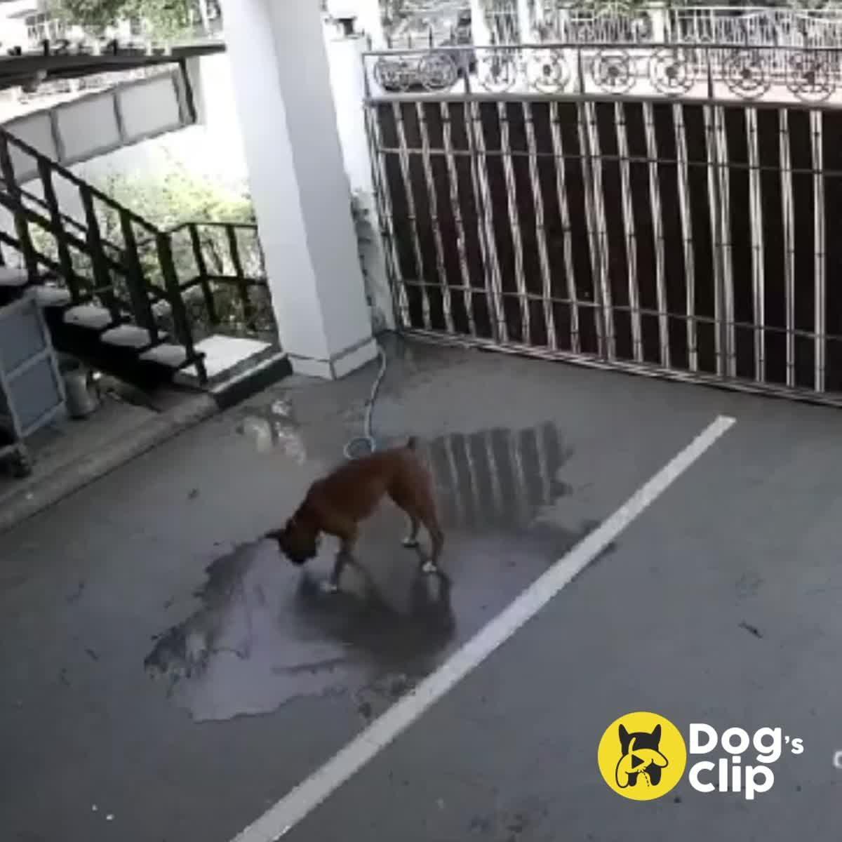 แก๊งน้องหมาอยากช่วยงานบ้านแต่ดันทำน้ำท่วม เพื่อนบ้านโทรตาม กลับบ้านด่วน