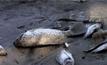 พบปลาตายจำนวนมากในบราซิล