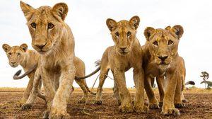 ภาพจากผู้เข้าประกวด National Geographic 2016 ที่สวยงามเกินบรรยาย