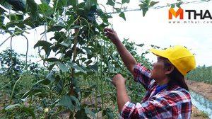 พลิกเกษตรแบบเคมี สู่วิถีสวนผักชีวภาพ ผลผลิตดีกำไรงาม