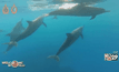 สหรัฐฯ เสนอกฎห้ามว่ายน้ำกับโลมาในรัฐฮาวาย