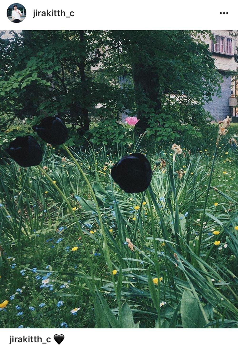 แฟนๆ เข้ามาคอมเม้นท์ส่งกำลังใจโพสต์ดอกไม้สีดำของเมฆ