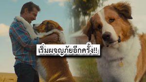 เตรียมซึ้งน้ำตาซึมอีกครั้ง ในภาคต่อการผจญภัยของน้องหมา A Dog's Journey