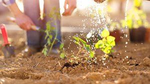10 วิธีใช้น้ำในสวน อย่างชาญฉลาด ช่วยชาติ ประหยัดน้ำ