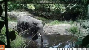 ส่งทีมสัตวแพทย์ลงพื้นที่ด่วน หลังพบช้างบาดเจ็บหนัก!! ที่เขตรักษาพันธุ์สัตว์ป่าภูวัว