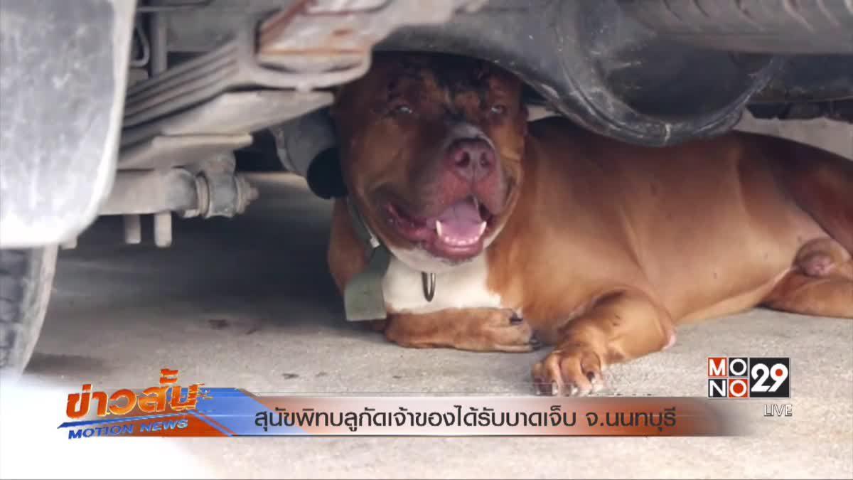 สุนัขพิทบลูกัดเจ้าของได้รับบาดเจ็บ จ.นนทบุรี