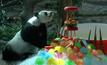 """สวนสัตว์เชียงใหม่จัดงานวันเกิด""""หลินฮุ่ย"""""""