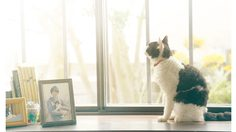 แมวก็ต้องออดิชั่นนะเออ!! เปิดประวัติเหมียว นานะ จากหนัง The Travelling Cat Chronicles