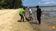 'โลมาอรวดี' ตายเกยชายหาดเกาะสมุยตัวที่ 10 กู้ภัยวอนช่วยดูแล