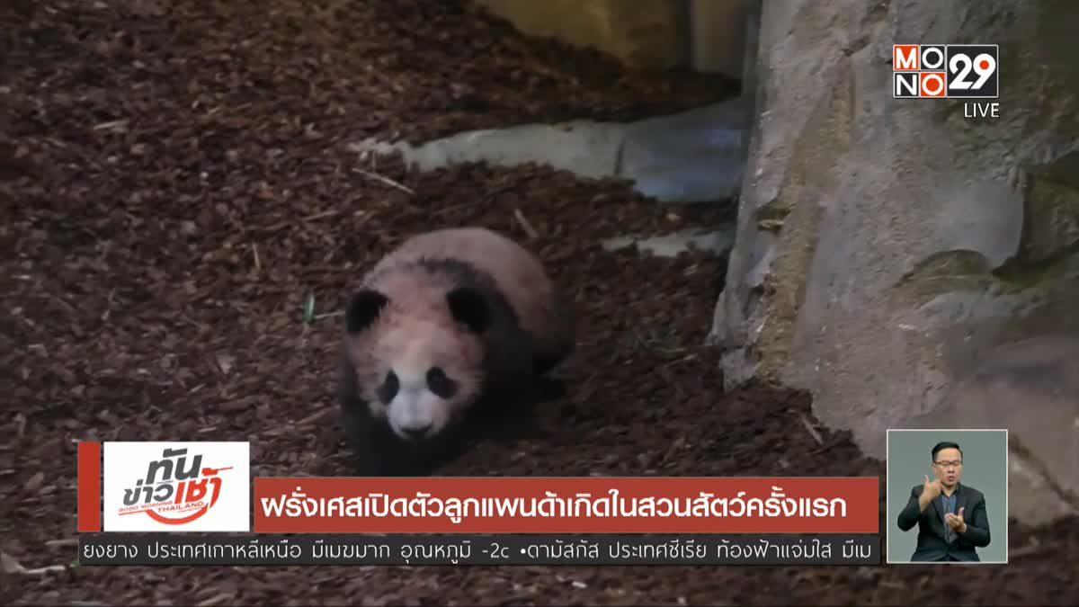 ฝรั่งเศสเปิดตัวลูกแพนด้าเกิดในสวนสัตว์ครั้งแรก