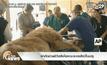 ผ่าตัดช่วยชีวิตสิงโตคณะละครสัตว์ในเปรู