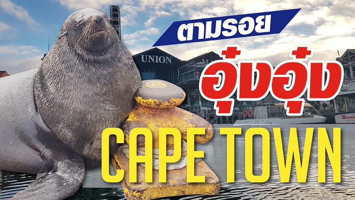 ดู แมวน้ำ อย่างใกล้ชิดที่เมืองเคปทาวน์ ประเทศแอฟริกาใต้