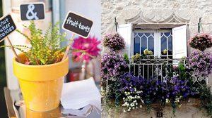 สวนกระถาง สวนเล็กๆ ในบ้านให้ความสดใสให้กับชีวิต
