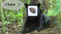 Ro M หินดำหายไป!! หินดำต้องไม่หายไปฟรีๆ