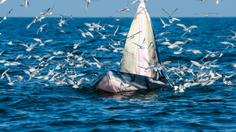 นั่งเรือชม วาฬบรูด้า ยักษ์ใหญ่ใจดีแห่งทะเลอ่าวไทย