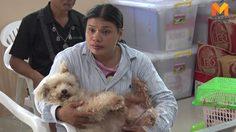 ปศุสัตว์ จ.ศรีสะเกษ เผยทำลายโค-กระบือ ป่วยตายด้วยโรคพิษสุนัขบ้าถึง 16 ตัว