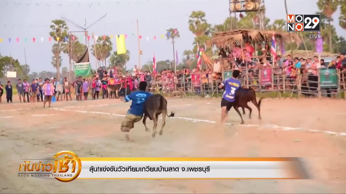 ลุ้น!แข่งขันวัวเทียมเกวียนบ้านลาด จ.เพชรบุรี