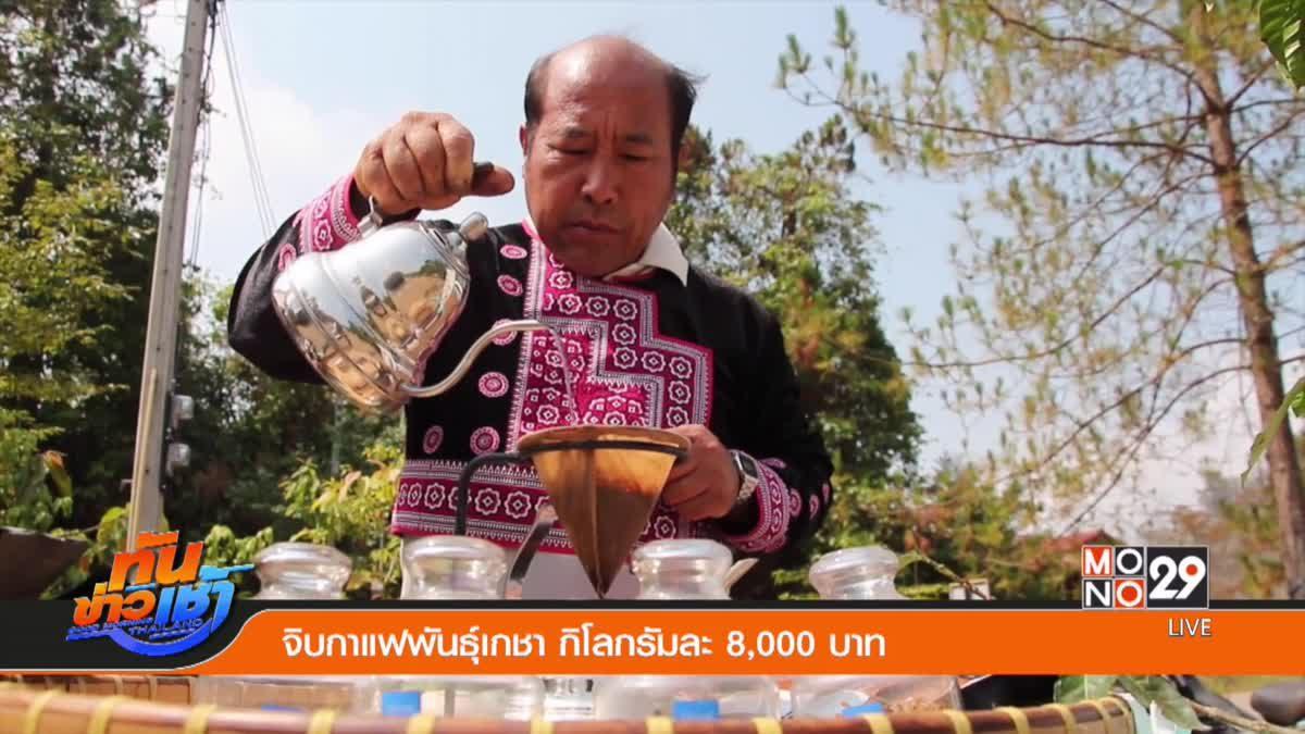 จิบกาแฟพันธุ์เกชา กิโลกรัมละ 8,000 บาท