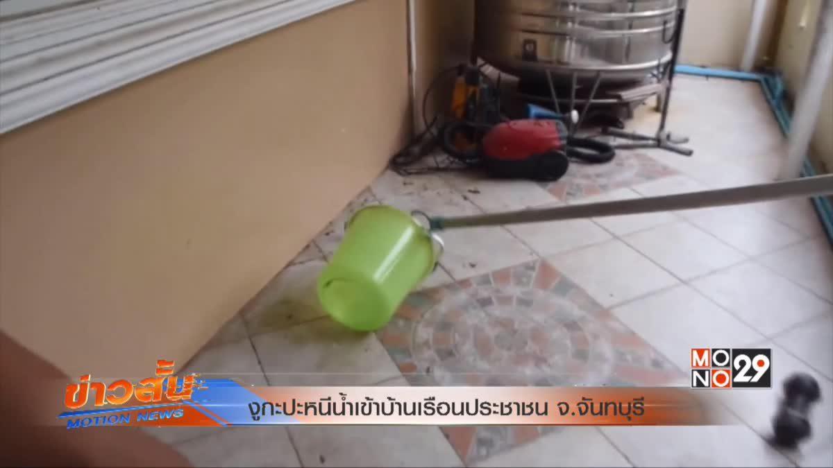 งูกะปะหนีน้ำเข้าบ้านเรือนประชาชน จ.จันทบุรี