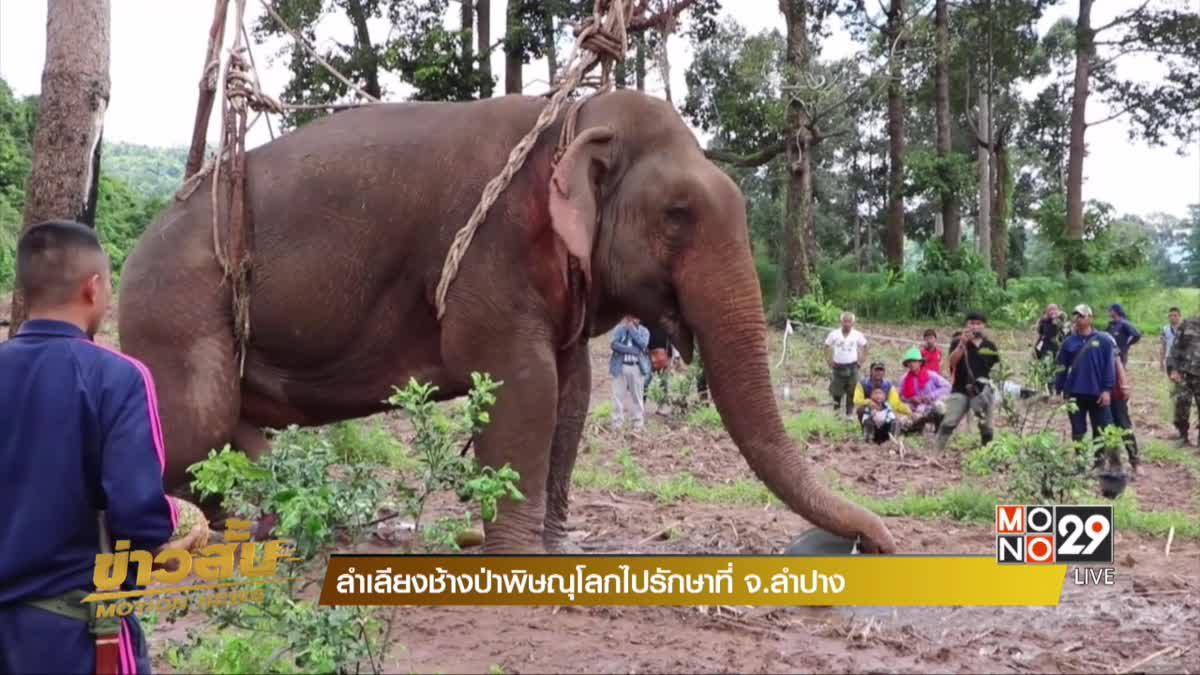 ลำเลียงช้างป่าพิษณุโลกไปรักษาที่ จ.ลำปาง
