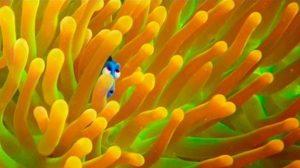 ตามหาดอรี่! ในตัวอย่างล่าสุด Finding Dory ที่เผยการผจญภัยพร้อมเพื่อนใหม่