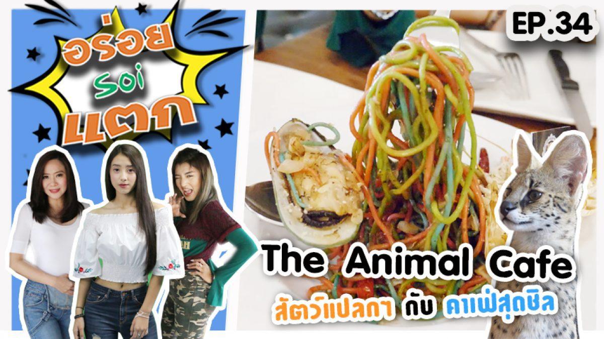 คาเฟ่สุดชีล กับ สัตว์สุดแปลก ที่ The Animal Cafe