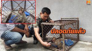 ลูกลิงที่รอดชีวิต จากการวางยาเบื่อ อาการล่าสุดปลอดภัยแล้ว