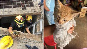 ทุกชีวิตมีค่า! ชื่นชมกู้ภัยใต้เต็กตึ้งเมืองคอน ช่วยแมวติดท่อระบายน้ำ