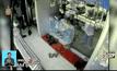 ลิงปล้นร้านอัญมณีในอินเดีย