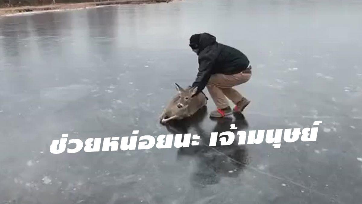 ดีมากเจ้ามนุษย์! ไหนๆ แล้วก็ช่วยกันหน่อยนะ เกิดเป็นสี่ขามันเดินบนน้ำแข็งยาก