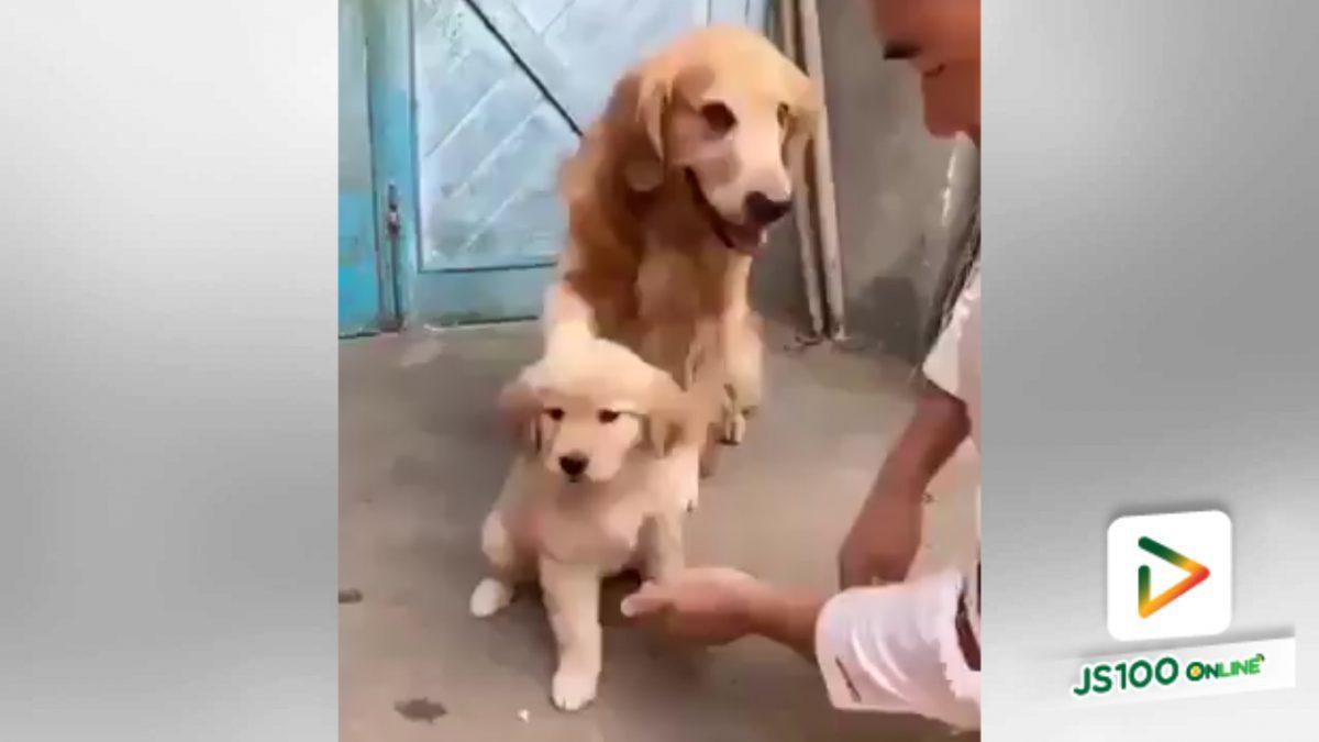 สุนัขน่ารักปกป้องลูกน้อยสุดๆ (9-5-61)