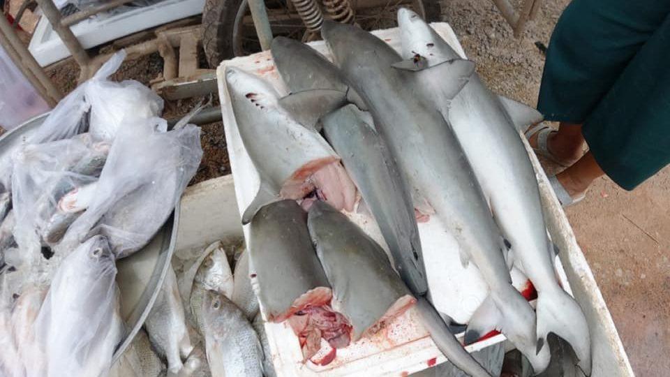 'อ.ธรณ์' ชี้แจงกรณีภาพฉลามหูดำ ถูกชำแหละวางขายบนเกาะดัง