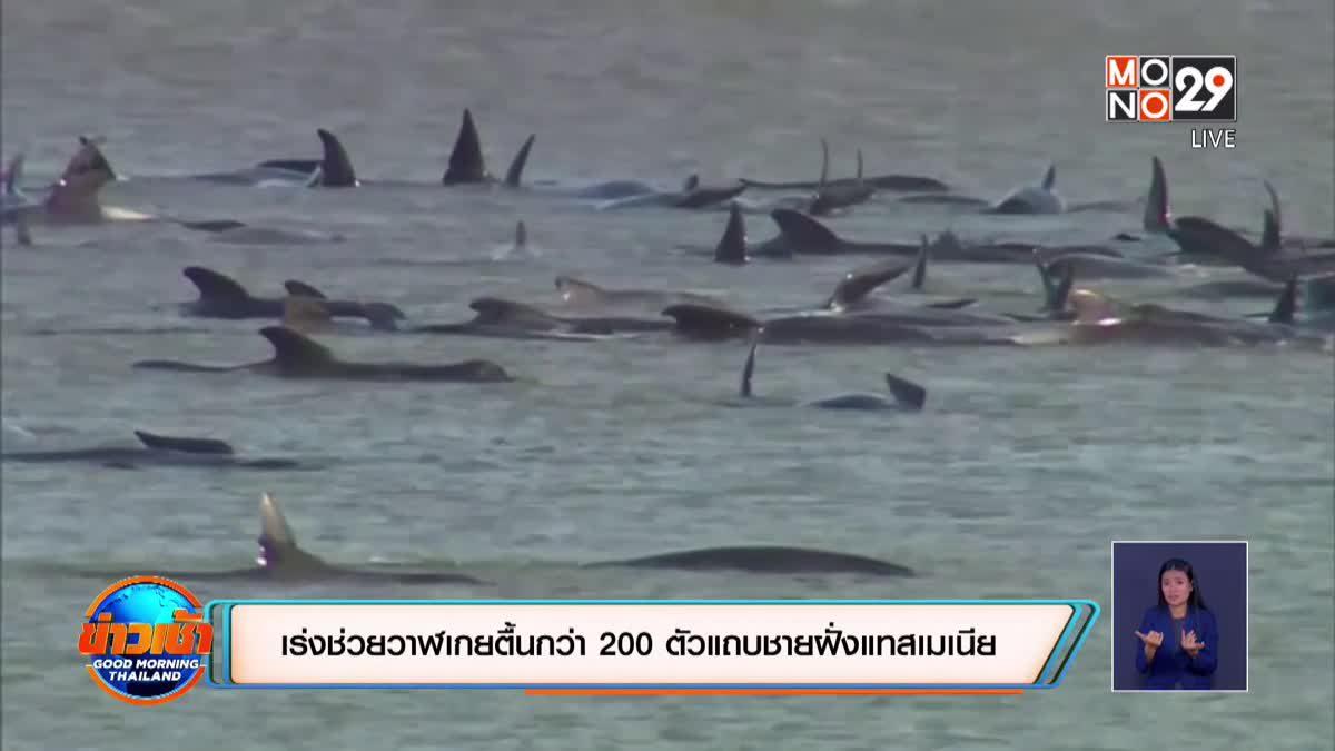 เร่งช่วยวาฬเกยตื้นกว่า 200 ตัวแถบชายฝั่งแทสเมเนีย
