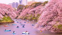 อัพเดต! พยากรณ์ซากุระบาน ประเทศญี่ปุ่น 2019 เตรียมตัวไปเที่ยวกัน