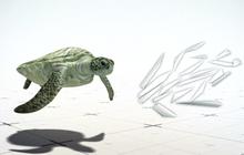 นักวิจัยชี้พลาสติกชิ้นเดียวทำเต่าตายได้