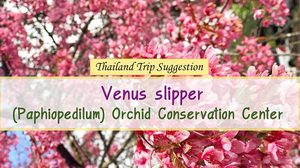 Thailand Trip Suggestion : Venus slipper (Paphiopedilum) Orchid Conservation Center