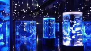 ท่องโลกใต้น้ำ กับ 6 อควาเรียม ที่น่าไปที่สุดในเอเชีย