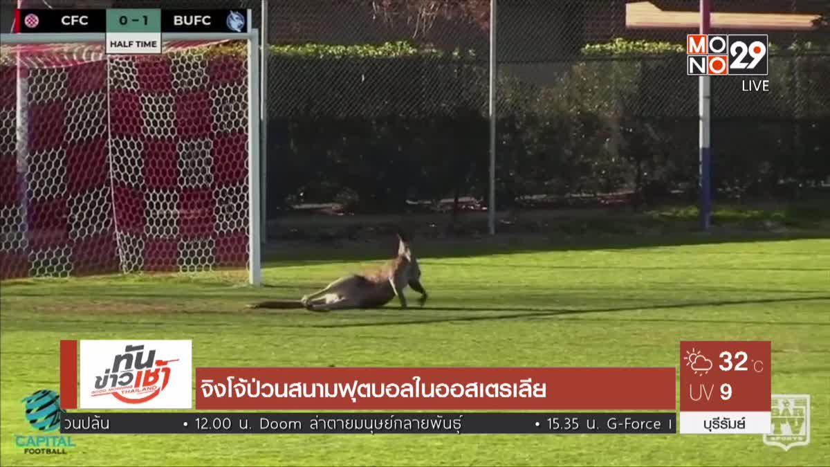 จิงโจ้ป่วนสนามฟุตบอลในออสเตรเลีย