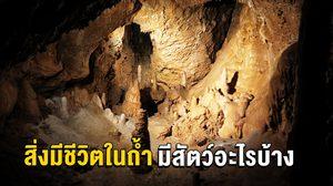 สิ่งมีชีวิตในถ้ำ มีสัตว์อะไรอาศัยอยู่บ้าง