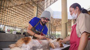 เปิดใจจิตอาสาหนุ่ม ตัดขนสุนัขจรจัดฟรีทั่วไทย ลั่นจะทำจนกว่าไม่มีแรงจับปัตตาเลี่ยน