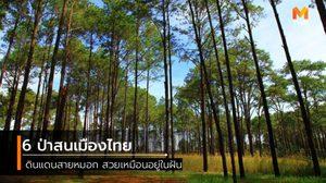 6 ป่าสนเมืองไทย ดินแดนสายหมอก สวยเหมือนอยู่ในฝัน
