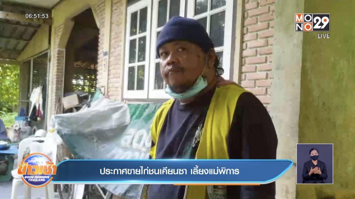 ประกาศขายไก่ชนเคียนซา เลี้ยงแม่พิการ