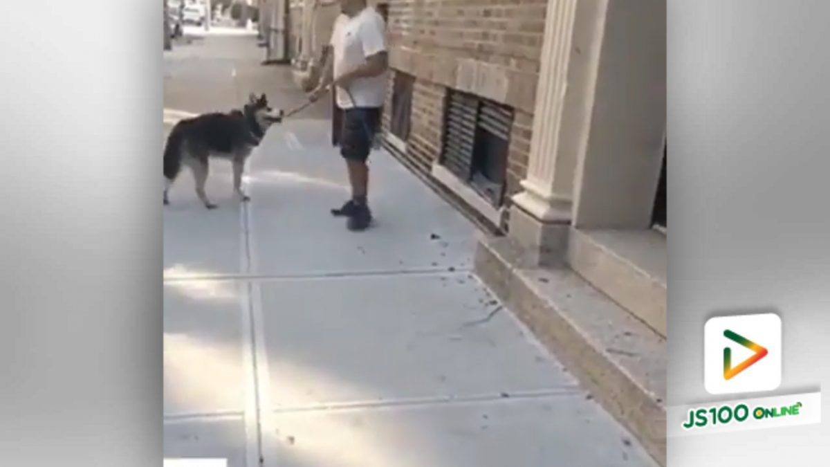 สุนัขอยากไปเที่ยว ไม่อยากเข้าบ้าน!! (9-5-61)