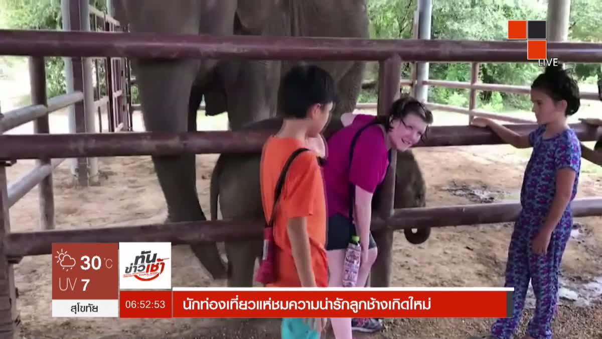 นักท่องเที่ยวแห่ชมความน่ารักลูกช้างเกิดใหม่