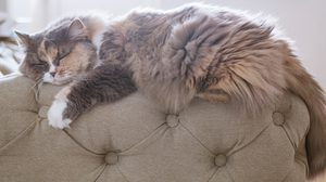 วิธีกำจัดขนแมว ที่ติดตามเฟอร์นิเจอร์และของใช้ในบ้าน