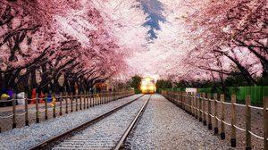 มาแล้วจ้า! พยากรณ์ดอกไม้บาน ประเทศเกาหลี ปี 2019