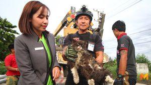 ชื่นชม!! สาวใจบุญจ้างรถยกเข้าช่วยแมวเปอร์เซียร์ หลักติดซอกกองเสาไฟฟ้า