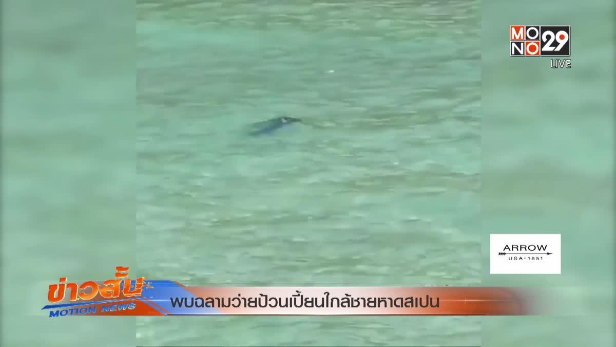 พบฉลามว่ายป้วนเปี้ยนใกล้ชายหาดสเปน